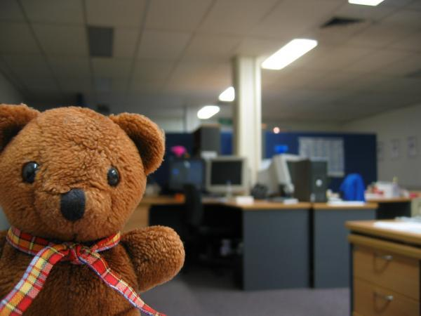 Bears at the office